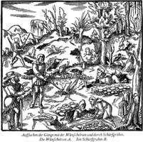 Antike Darstellung der Explorationstätigkeit bei Georg Agricola (1556) De Re Metallica Libri XII
